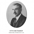Año 1922-Otto Meyerhof