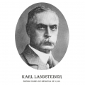 Año 1930-Karl Landsteiner