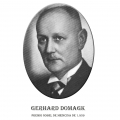 Año 1939-Gerhard Domagk