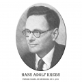 Año 1953-Hans Adolf Krebs